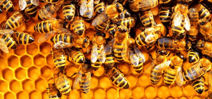 Bizarre: Bees scare residents at Abelemkpe